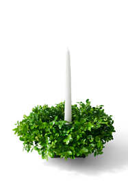 Fresh Boxwood Christmas Centerpiece
