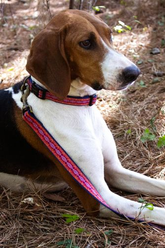 Carolina Pet Company Pendleton Classic Pet Leash