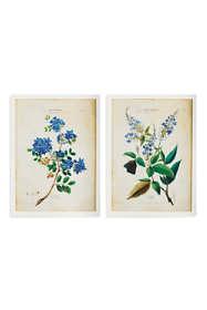 Napa Home and Garden Fleurs D Amerique Prints Set Of 2