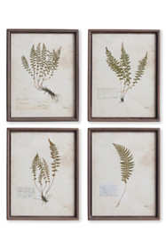 Napa Home and Garden Petite Frond Prints Set Of 4