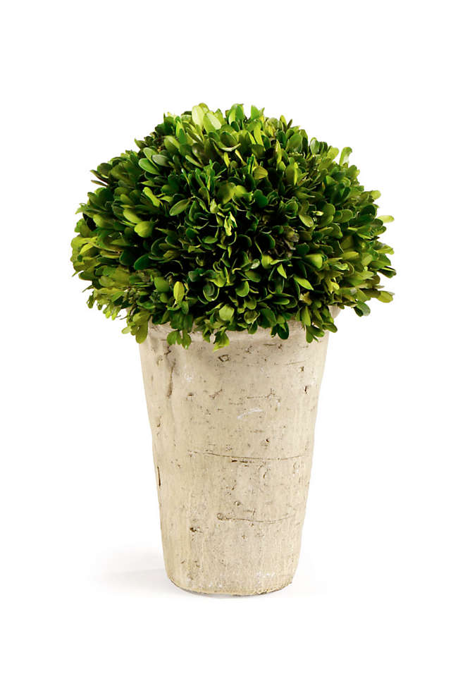 Napa Home and Garden Artificial Potted Boxwood Three Quarter Ball, Front