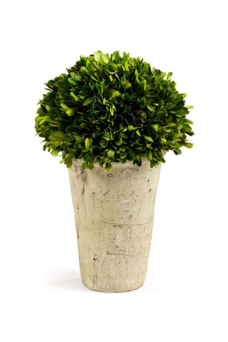 Napa Home and Garden Artificial Potted Boxwood Three Quarter Ball
