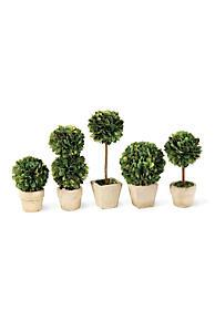 marron Siena Garden i1053109b DECO-Arbuste poteau Dimensions 50x25x100cm 1 pièces