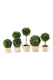 Napa Home and Garden Artificial Potted Boxwood Mini Topiaries Set Of 5