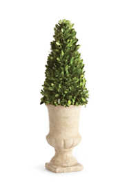 Napa Home and Garden 24 inch Artificial Boxwood Cone Topiary In Urn