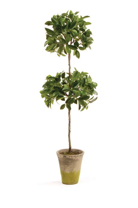 Napa Home and Garden 31 inch Artificial Ficus Topiary Potted Plant