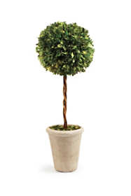 Napa Home and Garden 23.25 inch Artificial Boxwood Single Sphere Potted Topiary