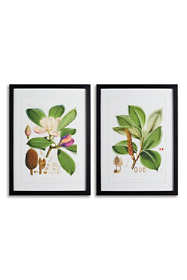 Napa Home and Garden Magnolia Prints Set Of 2