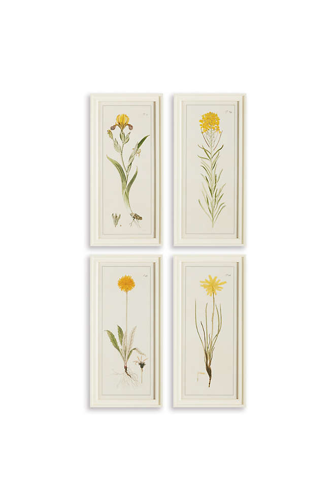 Napa Home and Garden Yellow Flower Prints Set Of 4, Front
