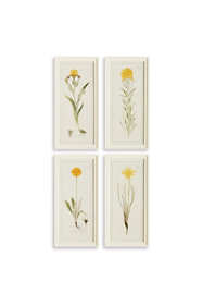 Napa Home and Garden Yellow Flower Prints Set Of 4