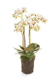 Napa Home and Garden 20 inch Artificial Phalaenopsis Orchid Drop In Plant