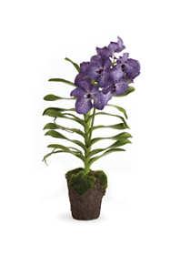 Napa Home and Garden 30 Artificial Vanda Orchid Drop In Plant