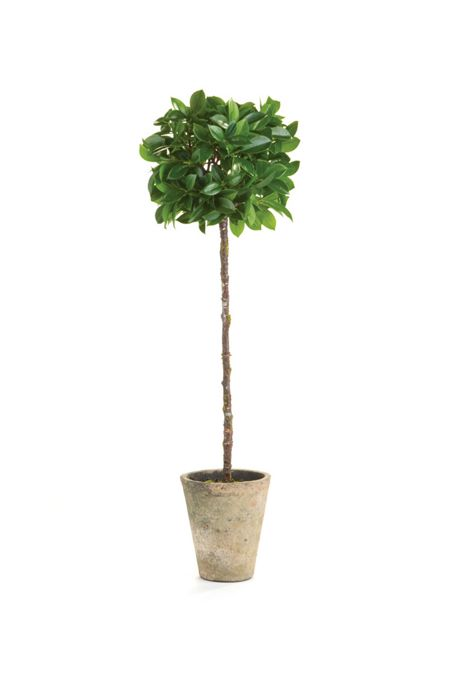 Napa Home and Garden 27 inch Artificial Ficus Topiary Potted Plant